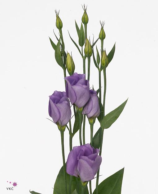 Lavender lisianthus bouquet